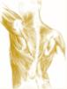 Richard Frais Ostéopathe <br>Méthode Équilios » Peyruis - Les Mées - Alpes-de-Haute-Provence (04) <br> Tél.0492642368